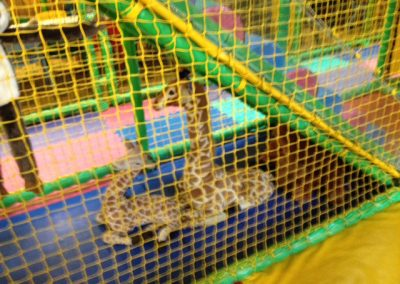 MonkeyMates-Softplay-Berkshire_0014